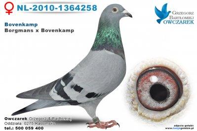 NL-2010-1364258-golab