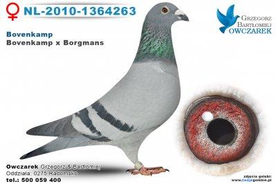 NL-2010-1364263-golab