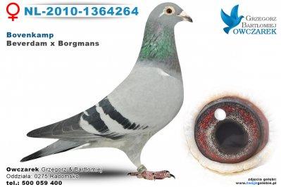 NL-2010-1364264-golab