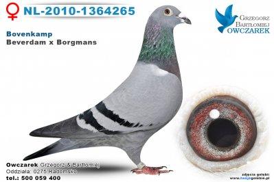 NL-2010-1364265-golab