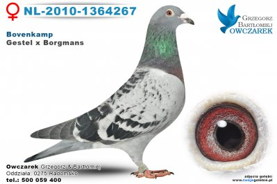 NL-2010-1364267-golab