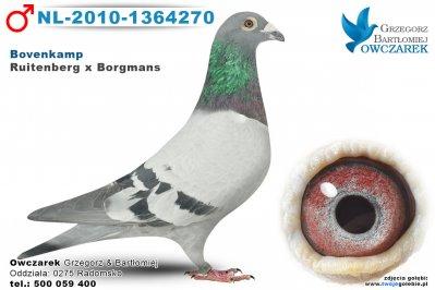NL-2010-1364270-golab
