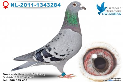 NL-2011-1343284