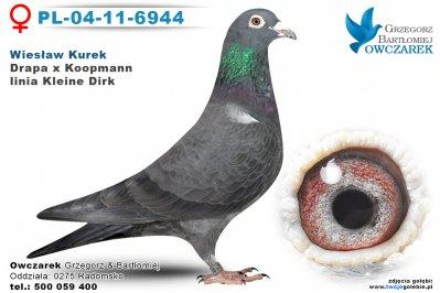 PL-04-11-6944-golab