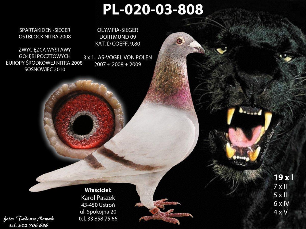 dPL02003808_192243_100314