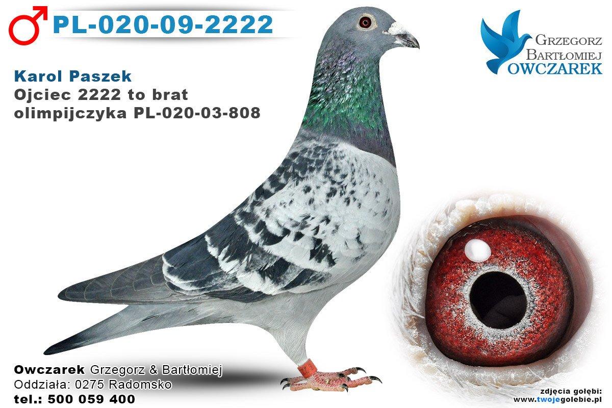 PL-020-09-2222-golab