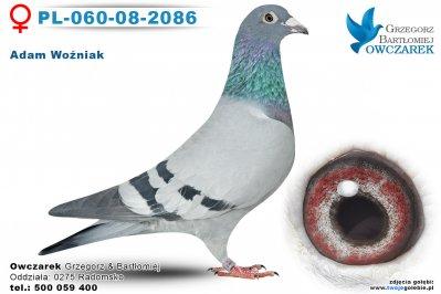 PL-060-08-2086-golab