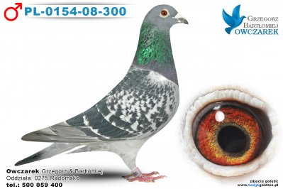PL-0154-08-300