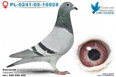 PL-0241-05-16928