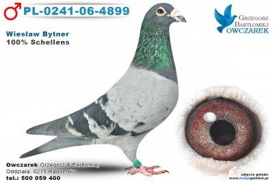 PL-0241-06-4899-golab