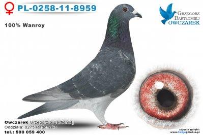PL-0258-11-8959-golab