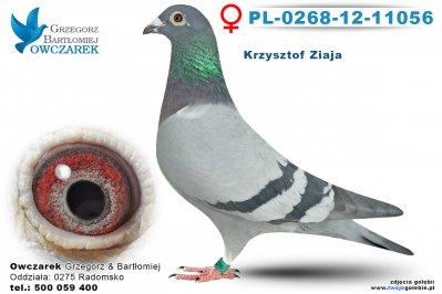 PL-0268-12-11056-golab