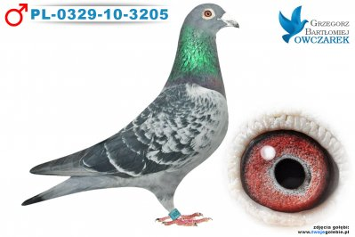 PL-0329-10-3205