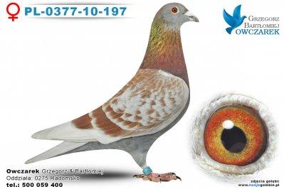 PL-0377-10-197