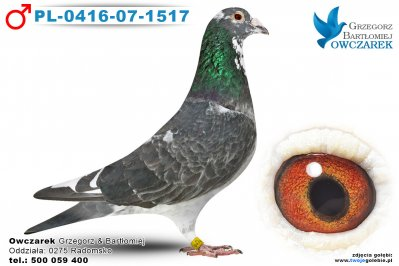 PL-0416-07-1517-golab