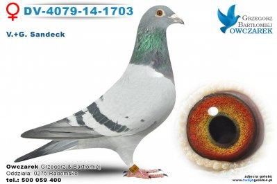 DV-4079-14-1703