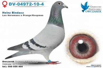 DV-04972-10-4