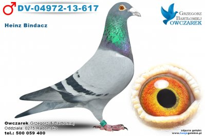 DV-04972-13-617