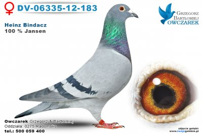 DV-06335-12-183