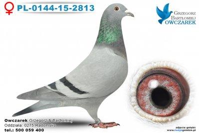 PL-0144-15-2813