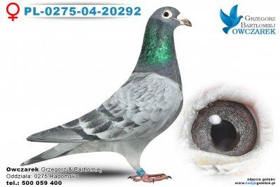 PL-0275-04-20292