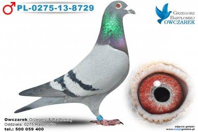PL-0275-13-8729