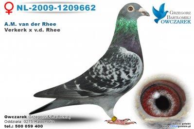 NL-2009-1209662