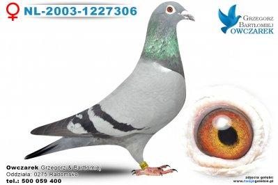 NL-2003-1227306