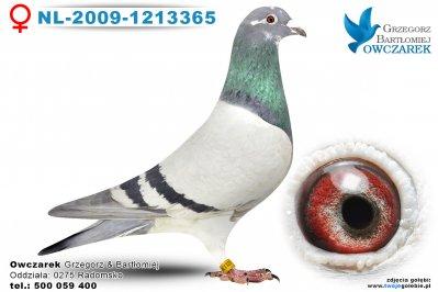 NL-2009-1213365
