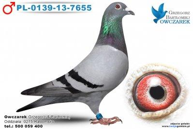 PL-0139-13-7655