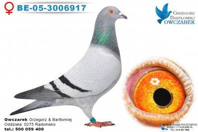 BE-05-3006917