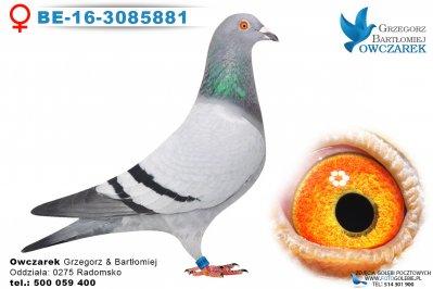 BE-16-3085881