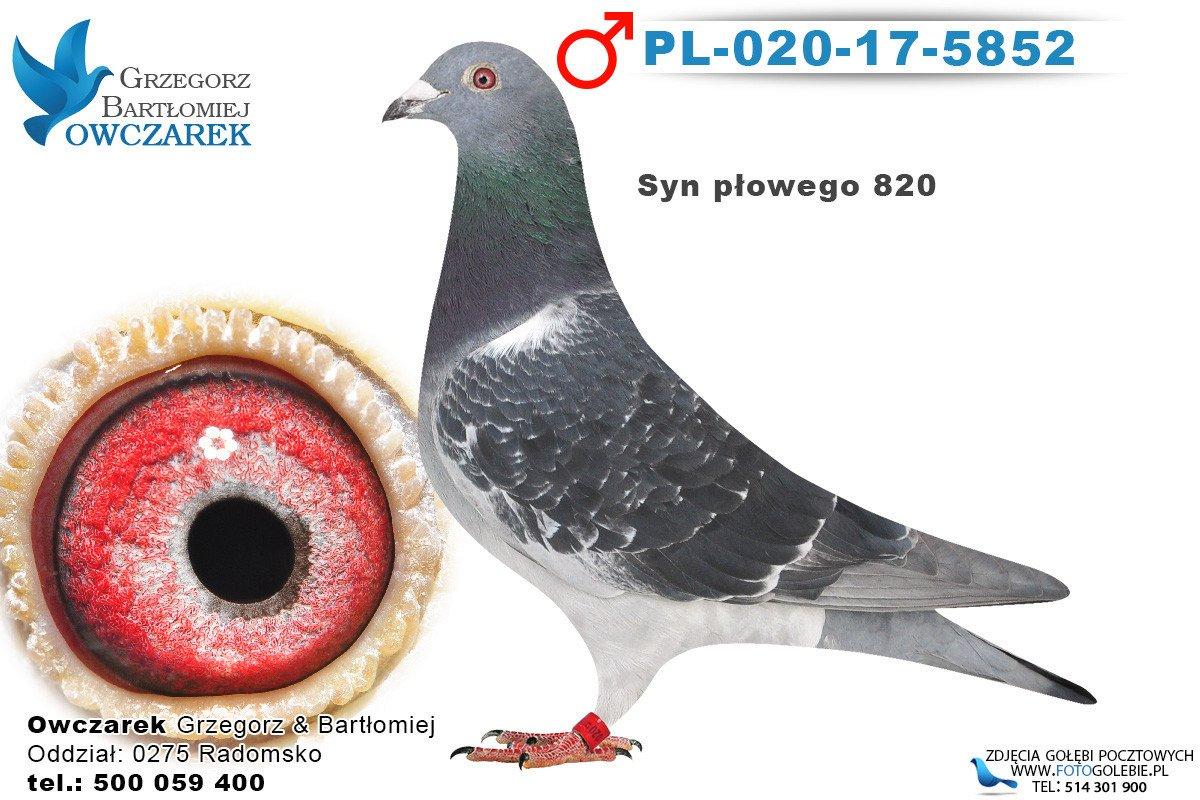 PL-020-17-5852