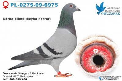 PL-0275-09-6975