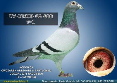 DV-03608-02-300