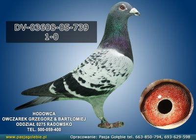 DV-03608-05-739