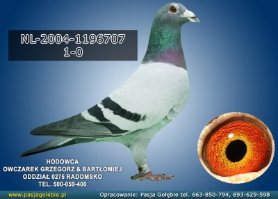 NL-2004-1196707