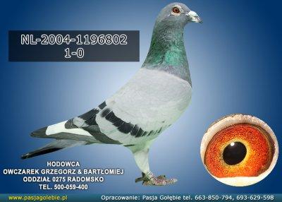 NL-2004-1196802