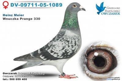 DV-09711-05-1089-golab