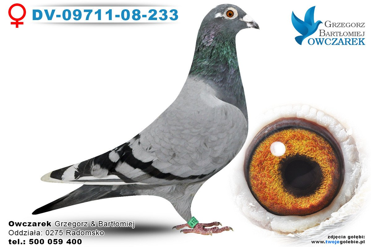 DV-09711-08-233