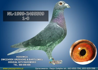 NL-1999-2495509