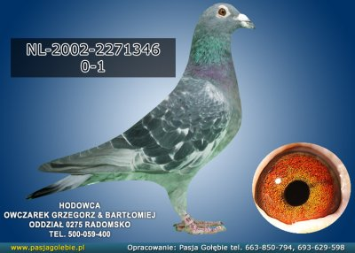 NL-2002-2271346