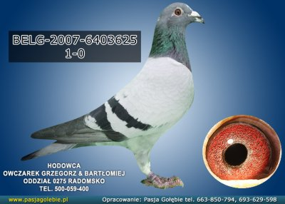 BELG-2007-6403625