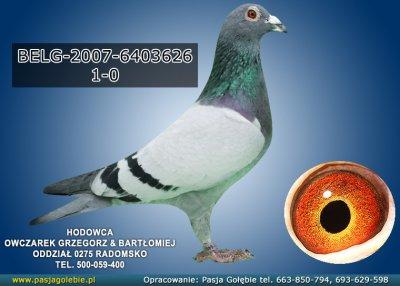BELG-2007-6403626
