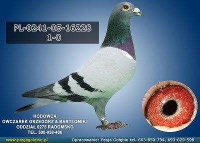 PL-0241-05-16228