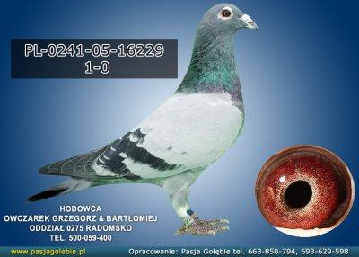 PL-0241-05-16229
