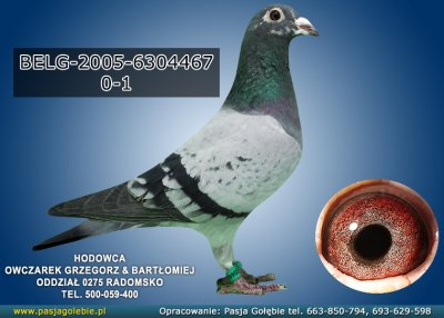 BELG-2005-6304467