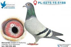 PL-0275-15-5188-samica