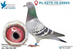 PL-0275-16-20605-0