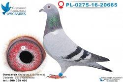 PL-0275-16-20665